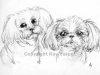 web-copyrighted-2-dogs.jpg