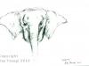 cambodia-sketches-web-view05.jpg